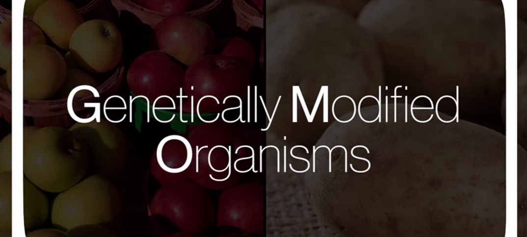 the advantages and disadvantages of genetically modifying organisms Genetic modified foods: advantages and disadvantages what are genetically-modified which was made more resistant to rotting by californian company calgene.