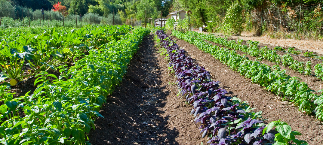 18 Advantages and Disadvantages of Organic Farming in Modern Agriculture