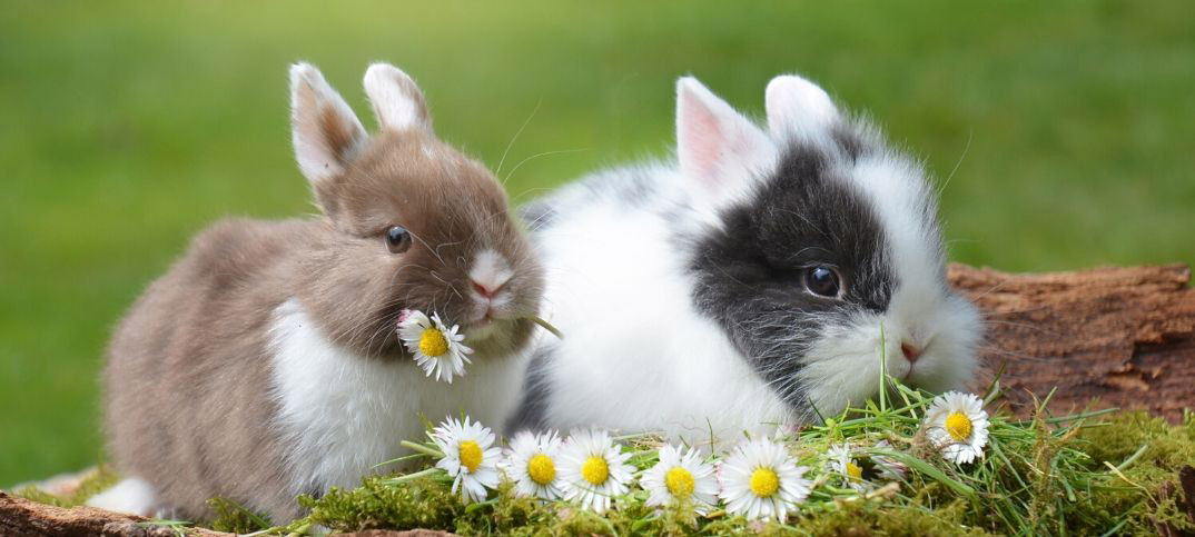 Pros and Cons of Rabbits as Pets