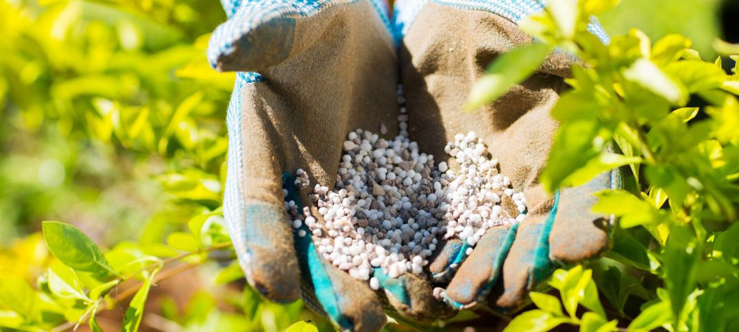 Advantages and Disadvantages of Ammonium Sulfate Fertilizer