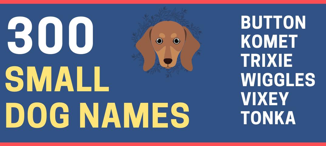 Small Dog Names